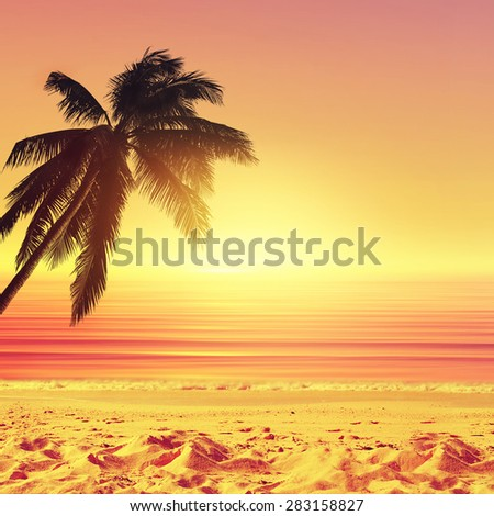 Coconut palm tree and sunset ocean beach. Tropical paradise. - stock photo