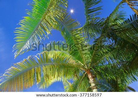 Coconut palm tree at night with night blue sky and stars in the background - stock photo