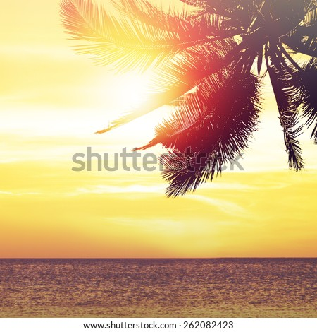 Coconut palm tree at sunset. Tropical beach background - stock photo