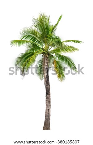 coconut palm tree isolated on white  - stock photo