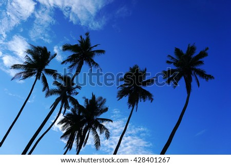 Coconut palm tree silhouettes at beautiful blue sky. Tropic landscape - stock photo