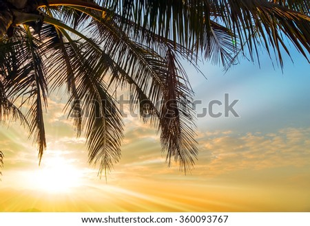 Coconut Palm tree Summer nature scene. - stock photo