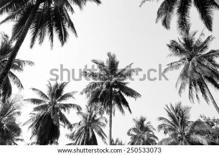 Coconut palm trees against  sky / Coconut palm trees - stock photo