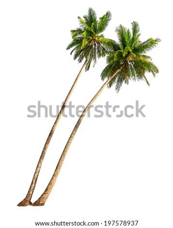 Coconut palm trees isolated on a white background - stock photo
