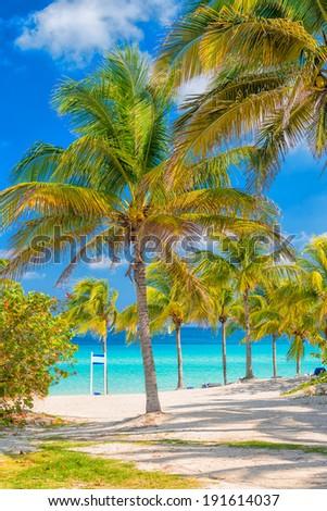 Coconut palm trees  on a sunny day at Varadero beach in Cuba - stock photo