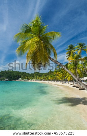 Coconut palm trees on the Caravelle beach in Sainte Anne, Guadeloupe, Caribbean - stock photo