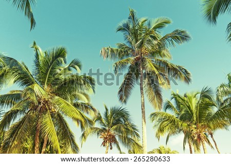 Coconut palm trees over clear sky background. Vintage style. Photo with instagram style green toned filter effect - stock photo