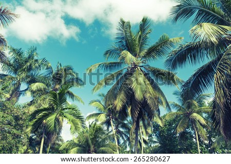 Coconut palm trees over cloudy sky background. Vintage style. Photo with instagram style blue toned filter effect - stock photo