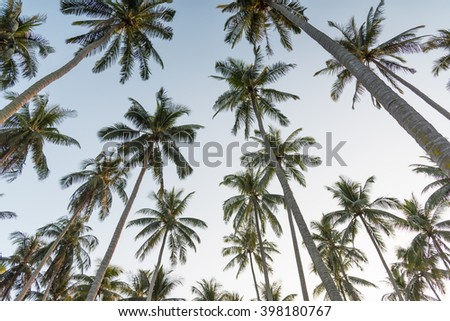 Coconut palm trees perspective high long view - stock photo