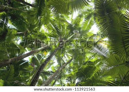 Coconut palm trees perspective view from floor high up - stock photo