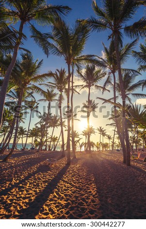 Coconut palm trees perspective view, sunrise shot - stock photo