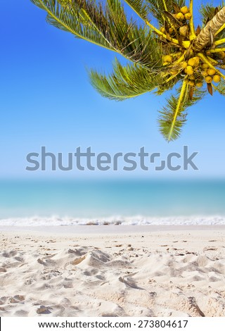 Coconut palm trees, sandy beach, ocean and perfect sky. Tropical background. - stock photo