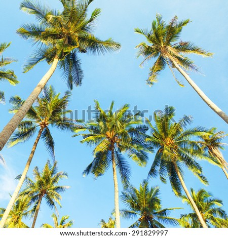 coconut palms and blue sky background, Thailand - stock photo