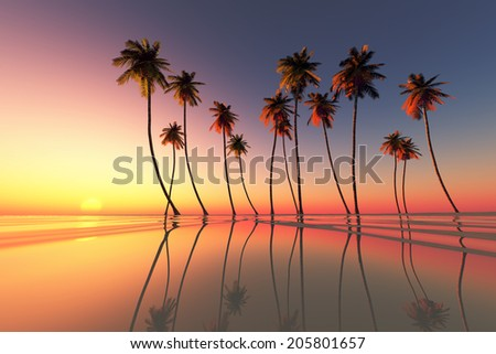 coconut palms at dramatic tropical sunset over calm sea - stock photo