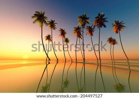coconut palms at tropical sunset over calm sea - stock photo