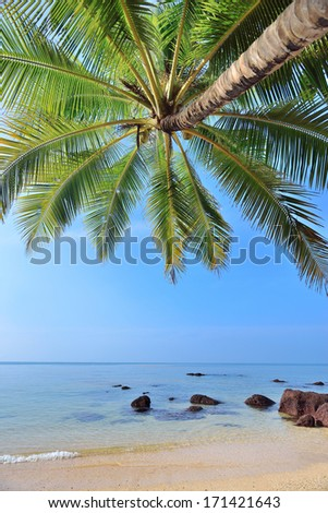 Coconut palms tree on sand beach in tropical island , with sunlight - stock photo