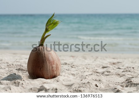 coconut sprout on the tropical sea beach - stock photo
