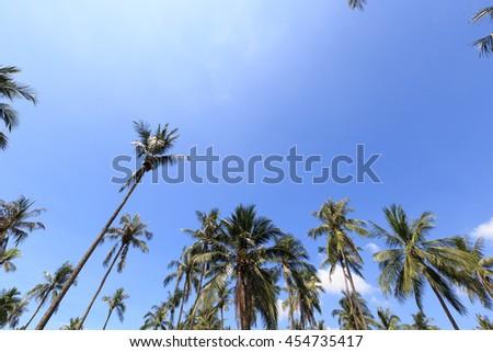Coconut tree against blue sky - stock photo