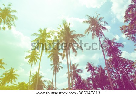coconut tree at tropical coast,made with Vintage Tones,Warm tones - stock photo