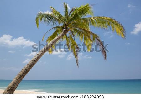 Coconut tree on the beach - stock photo
