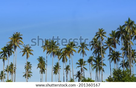 Coconut Tree with Clear Blue Sky - stock photo