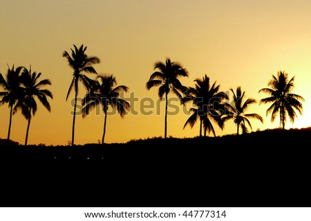 Coconut trees at sunset - stock photo