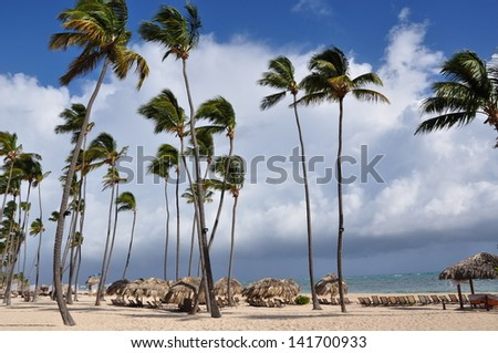 Coconut trees in the beach - stock photo