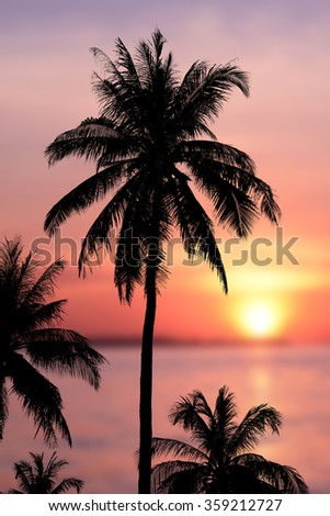 Coconut trees silhouette background sunset. - stock photo