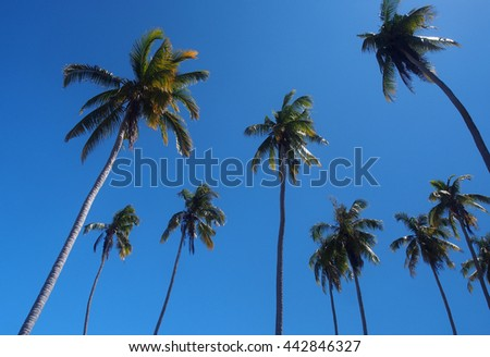 Coconut trees with clear blue sky - stock photo