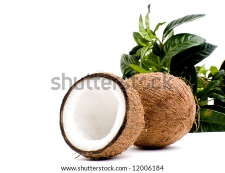 Coconuts isolated on white - stock photo