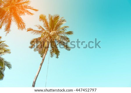 coconuts tree with sky - stock photo