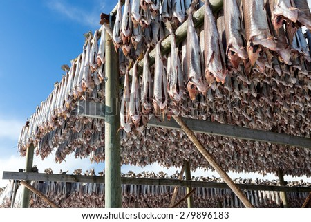 Cods dry on wooden stand, Lofoten, Norway - stock photo