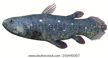 Coelacanth Fish over White - Coelacanth fish was thought to be extinct but several living specimens have found to still exist in tropical seas. - stock photo