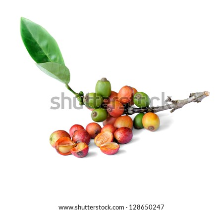 Coffee beans isolated on white background, selective focus. - stock photo