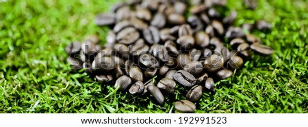 coffee beans on grass - stock photo