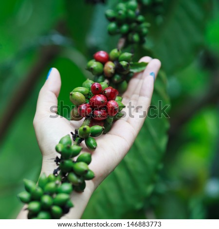 Coffee beans on woman hand - stock photo
