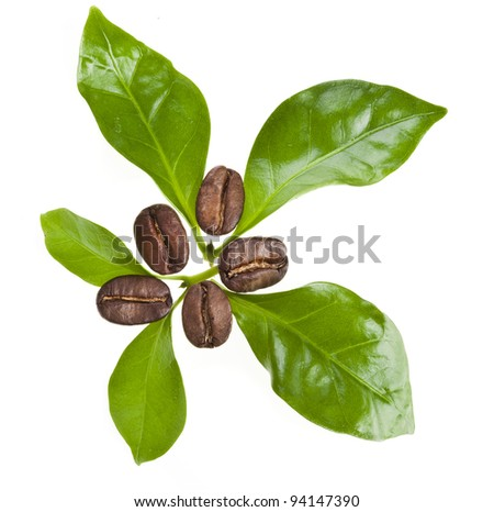coffee beans with leaves coffee tree decor, Isolated on white background - stock photo