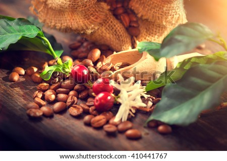 Coffee beans with real coffee fruits, flowers and leaves on wooden table close up. Red coffee beans and flower on a branch of coffee tree - stock photo