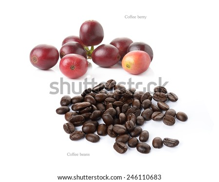 coffee berry and coffee beans isolated on white - stock photo