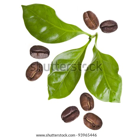 coffee grains and leaves of coffee trees surface top view sign close HD Wide Wallpaper for Widescreen