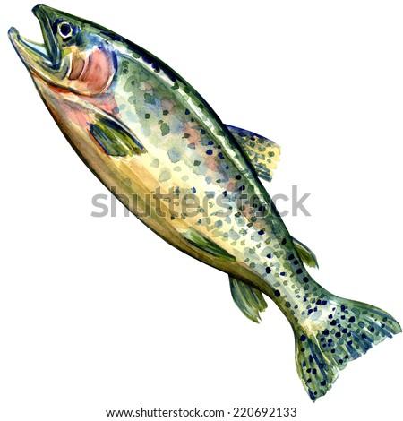 coho salmon fish on white background - stock photo