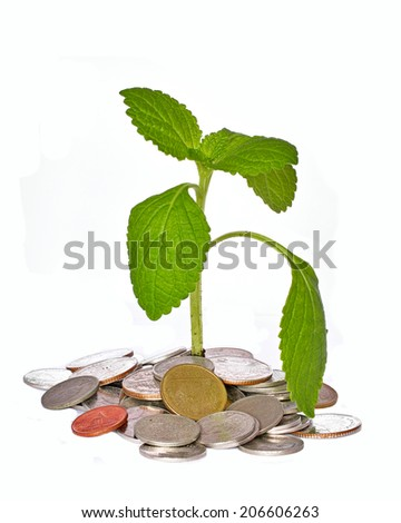 coin money with green leaf growing - stock photo