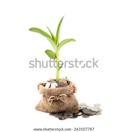 Coins and plant in bag on white background - stock photo