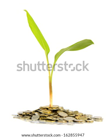 Coins and plant, isolated over white background. - stock photo