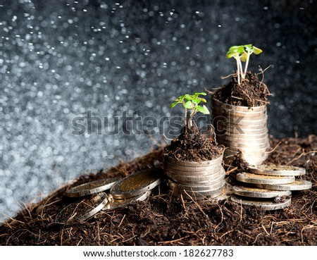 coins and plant - money growth concept. Dark background - stock photo
