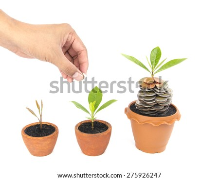 Coins in soil with young plant and human hand. Money growth concept - stock photo