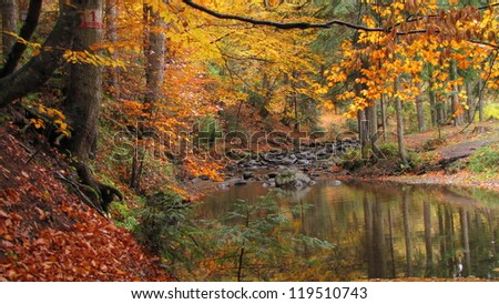 cold and clean stream runs through beech and fir forest in autumn colors - stock photo