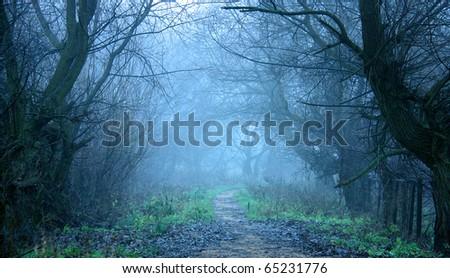Cold autumn mist - stock photo