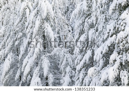Cold snow covered tress, Stowe, Vermont, USA - stock photo