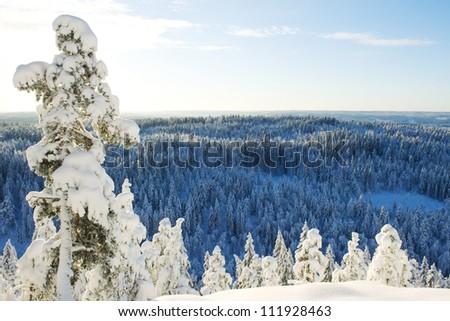 Cold swedish winter landscape - stock photo